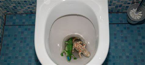 bathroom is clogged clogged toilet how to remove toys and objects