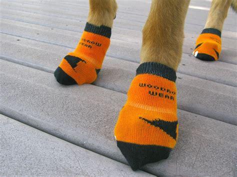 diy traction socks for dogs best 25 socks for dogs ideas on sock cat