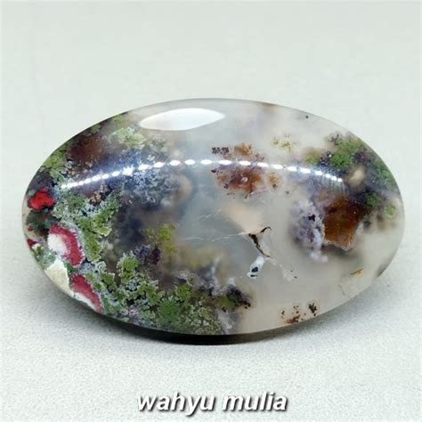 Batu Lumut Sawe Trenggalek batu lumut sawe trenggalek aquarium asli kode 1036