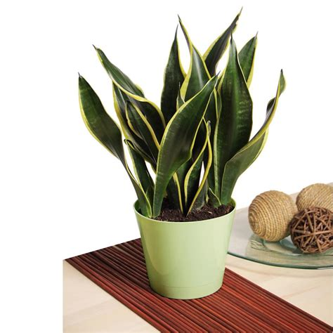plant indoor low maintenance houseplants hgtv
