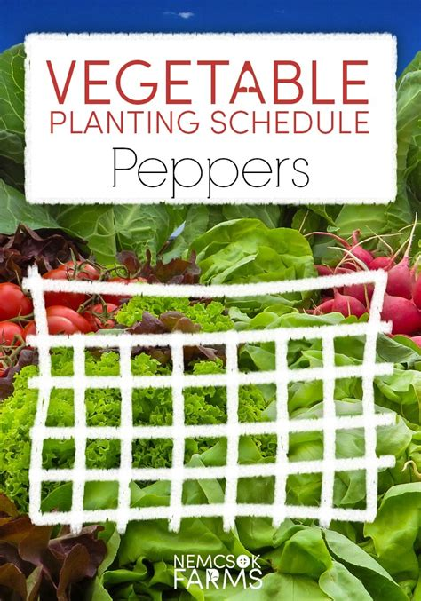 vegetable garden planting schedule vegetable planting schedule for peppers nemcsok farms