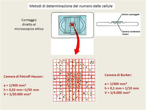 di burker prodotti metabolismo microbico ppt scaricare