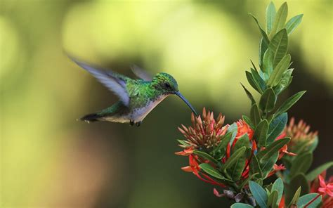 kolibri hd wallpaper animals wallpapers