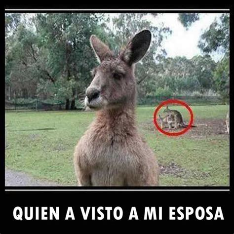imagenes graciosasde animales chistosas de animales www imgkid com the image kid has it