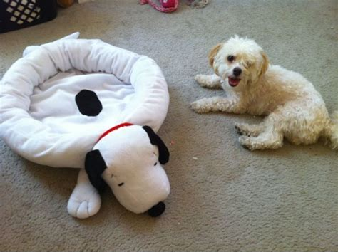 snoopy dog bed snoopy bed 171 simbainthecity com