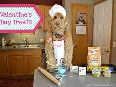 doodle pet bakery 1000 images about spencer the goldendoodle on