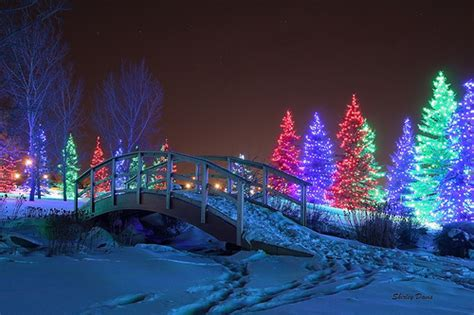winter garden lights spruce lights winter