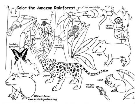 coloring pages rainforest rainforest coloring page