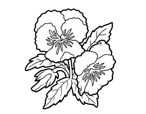 fiori di viola disegno di fiori di viola pensiero da colorare