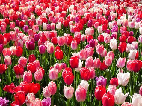 Avis Sur Tapis Ch De Fleurs by Tapis Ch De Fleurs Mode D Emploi Tapis Le Ch De