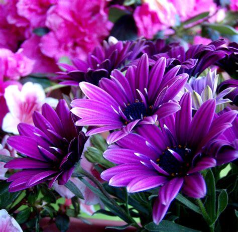 fiori colore viola il colore viola foto immagini natura piante fiori e