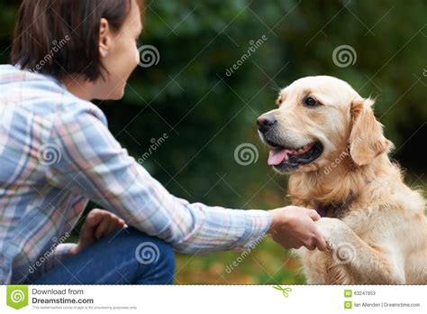 golden retriever owners pet golden retriever and owner outside together stock photo image 63247853