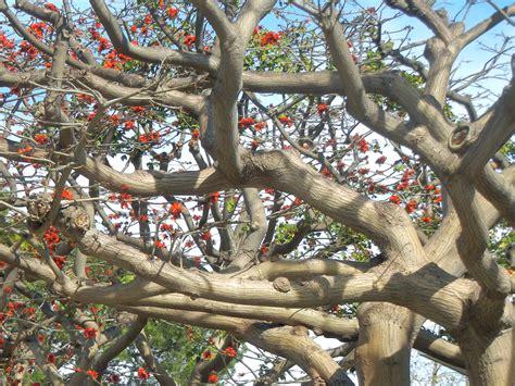 fruit trees los angeles trees of los angeles los angeles affair