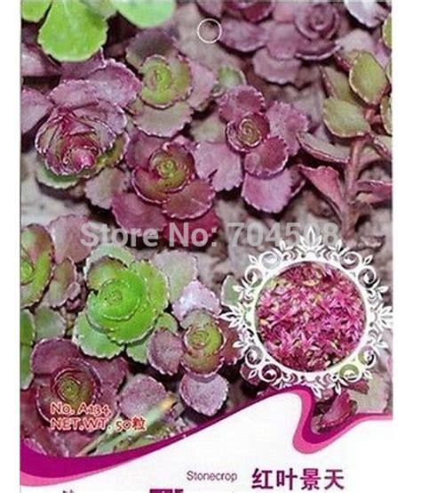 nomi di fiori rari 17 migliori idee su fiori rari su fiori