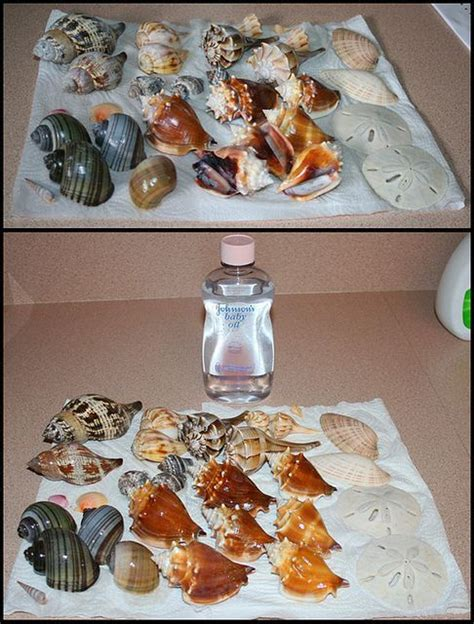 diy crafts with seashells 25 best ideas about seashell crafts on seashell projects shell crafts and seashell