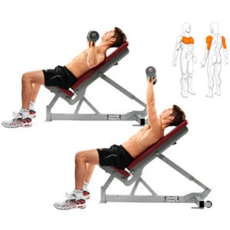 bench chest exercises pain and gain perfectly timed fat loss part 2