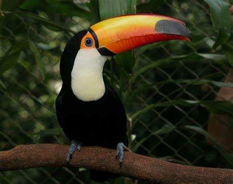 imagenes de animales vertebrados aves fotos de animales imagenes de animales mamiferos aves