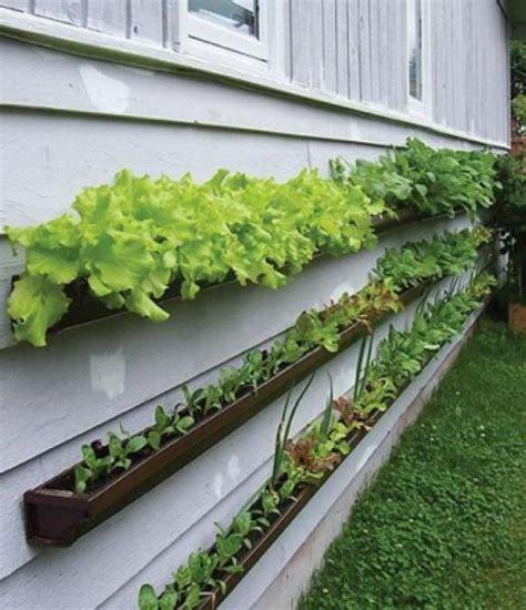 vegetable garden catalogs ideas for vegetable garden layout az home plan