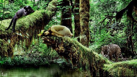 imagenes de animales jungla la reina de la jungla los cuatro elementos