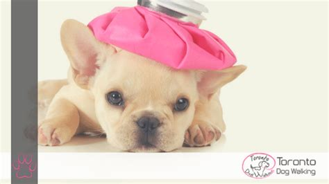 puppy stool overfeeding overcoming upset tummies in dogs causes remedies