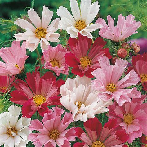 Benih Bibit Bunga Matahari Mix Garden jual benih tanaman mr fothergills di indonesia