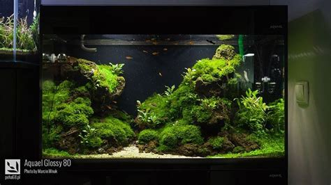 Aquascape Tank For Sale by 1641 Best Images About Aquascaping Paludarios Biotopos