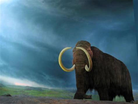 hutte en os de mammouth huttes en os de mammouths dinosoria