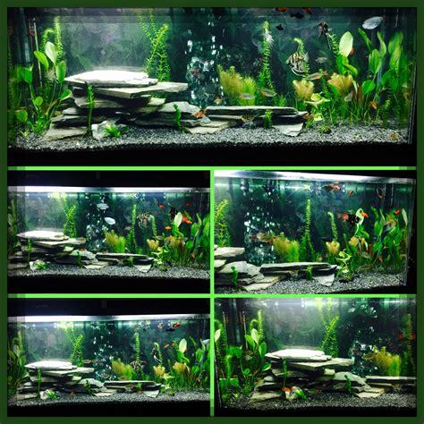 aquarium design using slate 50 gallon fish tank natural environment all of the
