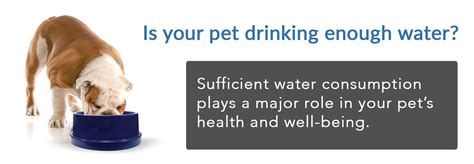 how often should puppies drink water how much water should my or cat drink