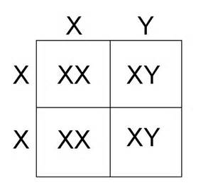 color blindness punnett square 301 moved permanently