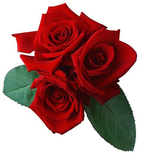 imagenes png hd 174 gifs y fondos paz enla tormenta 174 im 193 genes de rosas rojas
