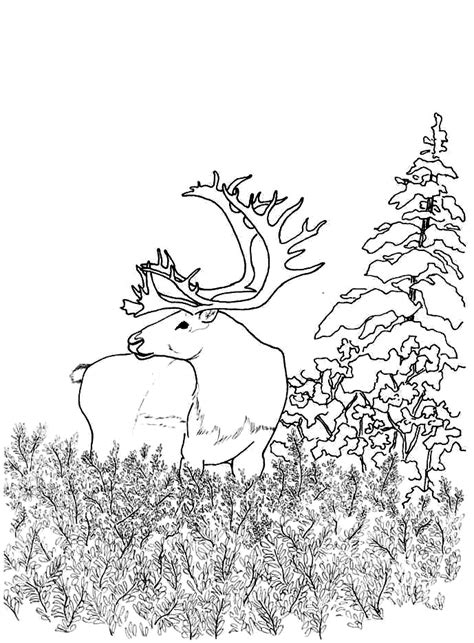 woodland animals an colouring book for dreaming and relaxing books woodland animals coloring pages coloring home