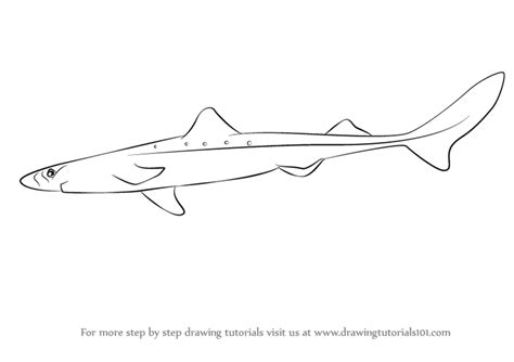 Dogfish Drawing learn how to draw a spiny dogfish fishes step by step