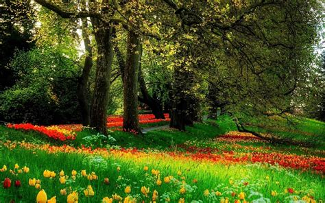 beautiful trees flowers clean cut tree experts is one