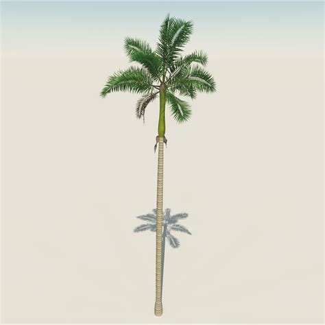 model florida royal palm tree   poly vr ar