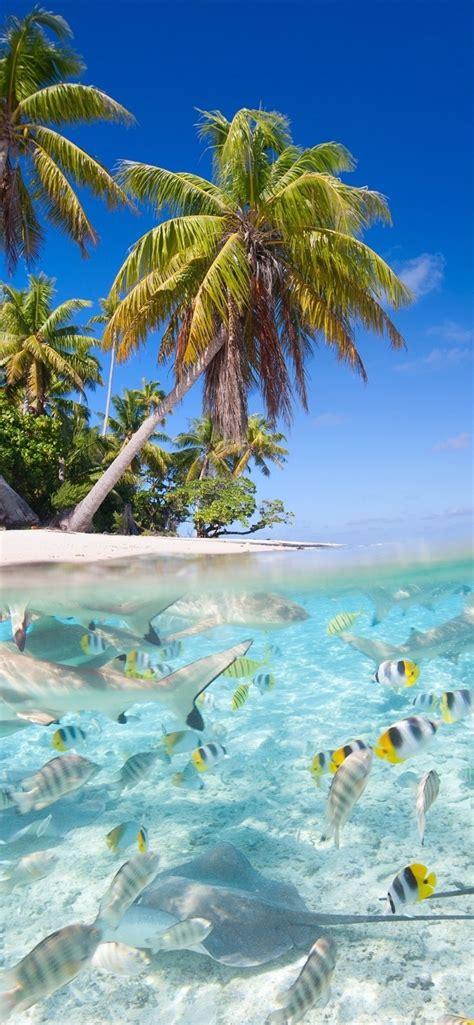 wallpaper tropical scenery sea beach palm trees fish