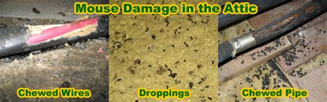 How To Get Rid Of Mice In Ceiling by How To Get Rid Of Mice In The House Attic Garage Walls