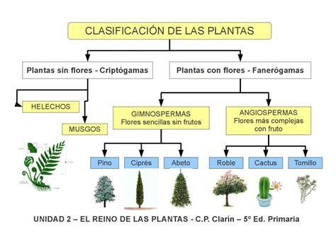 olguchiland las plantas ii esquema 2 el reino de las plantas by edita sueiras issuu