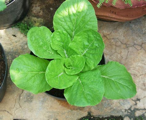 Jual Polybag Jakarta jenis sayuran organik yang mudah ditanam di tempat tinggal