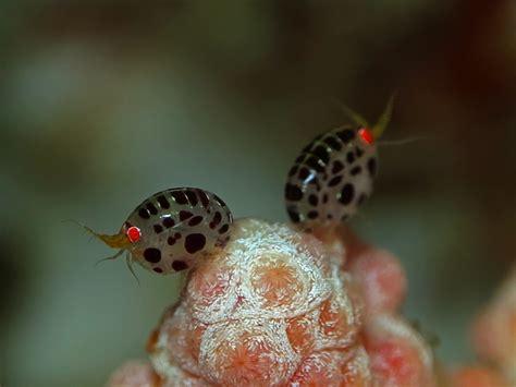 bug three 2018 inilah lady bug sama nama tapi beda alam mongabay co id