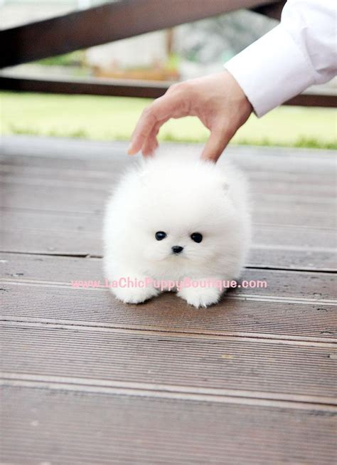 maltese don t don t the name of the but it s adorable i don t generally like small dogs
