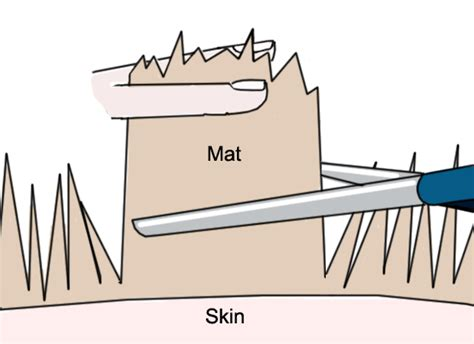 How To Remove Mats From by Cat Grooming A Primer On Keeping Clean Catster