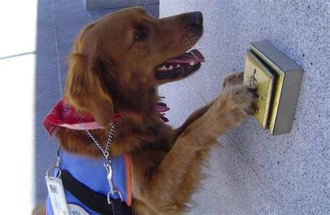 service dogs ma service sales and certification ocala florida seizure detection