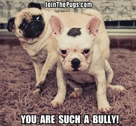 you pug non confrontational pug join the pugs