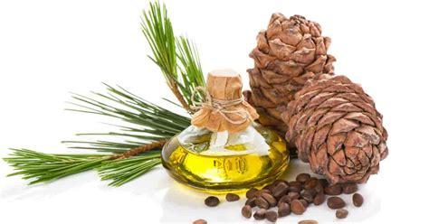 cedar oil bed bugs how effective is cedar oil for bedbugs ohsimply com