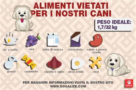 alimenti vietati ai cani infografica quali sono gli alimenti vietati ai cani