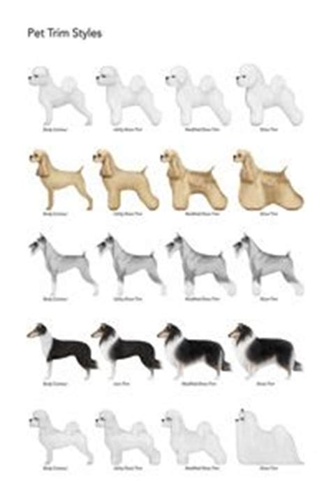 dog grooming grooming different dog breeds dog grooming on pinterest poodle dog grooming and pet