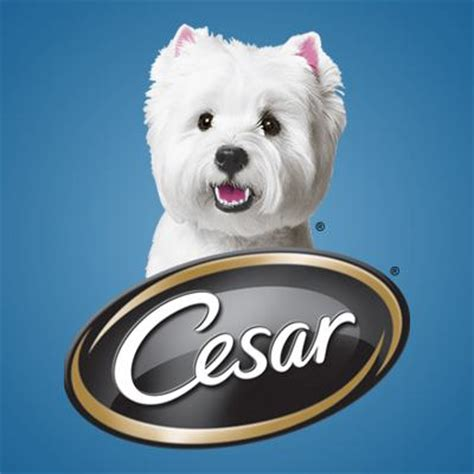 cesar puppy mommywholovesgiveaways net cesar meaty selects not just for small dogs new cesar