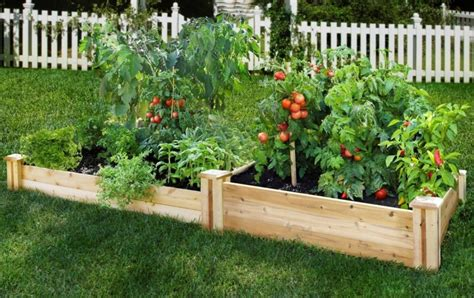 Small Vegetable Garden Ideas How To Plan And Design Them Small Raised Vegetable Garden