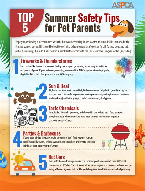 7 Summer Safety Tips by Manchester West Veterinary Hospital